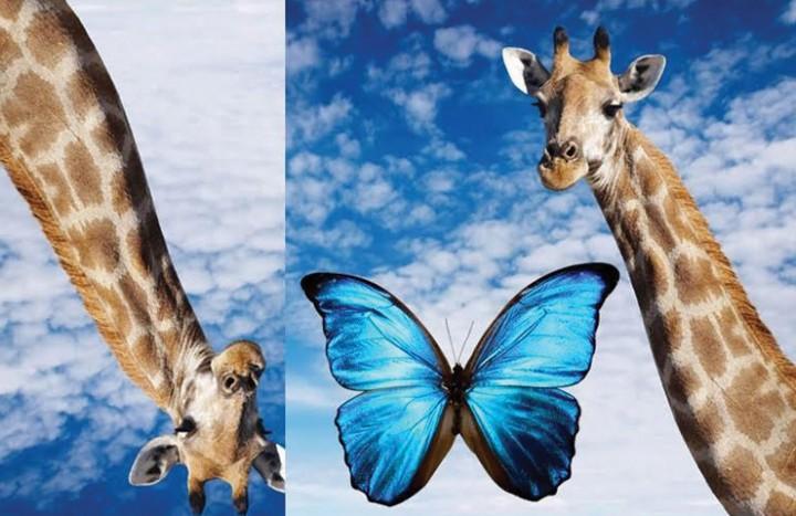 Cou Papillon Cou