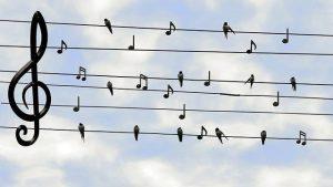 Porte-oiseaux