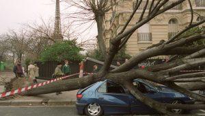 à Paris arbre couché sur voiture