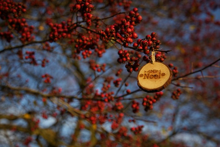 Noël - Photo byShannon HenriksenonUnsplash
